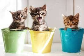 Animal Pots Three Funny Kittens Sitting Inside Colorful Pots Stock Photo