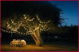 solar powered fairy lights for trees solar tree lights for the garden solar garden tree lights a looking