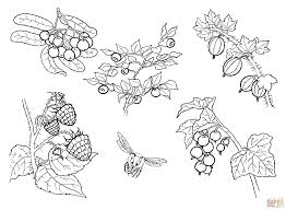 berries coloring page free printable coloring pages