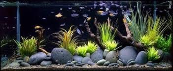 Good Fish Tank Decoration Ideas Fish Tank Accessories in