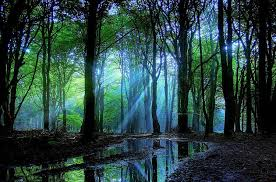 pretty one of a enchanted forest pictures glob earth