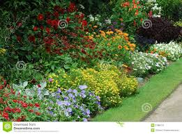 flower bed with assorted plants stock image image 27886721