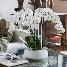 orchid arrangement grandioso white with white orchids orchid