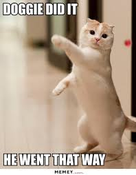 Funny Cat And Dog Memes - a white cat pointing memey com