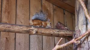 Squirrel In Basement by Basement Waterproofing In The Construction Of Buildings Stock