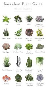 best 25 indoor cactus plants ideas on pinterest cool indoor