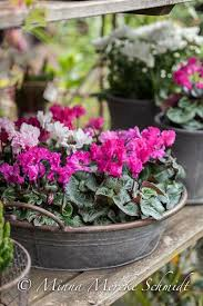 Indoor Garden Containers - pin by richard on flowers rah pinterest container gardening