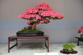 indoor bonsai style ideas as home decor small garden ideas