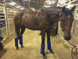 no bow wraps product review draper equine therapy no bow wraps jumper nation