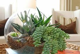 Beautiful House Plants Pretty Photos Of Cactus House Plants As Tall Artificial Plants