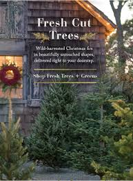 organic and pesticide free christmas trees wreath and greenery