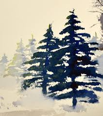 fir tree spruce tree pencil and in color fir tree