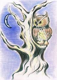 brown owl drawings fine art america