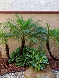 White Rock Garden Small Palm Trees In Rock Garden With Foliage Brown Rocks And