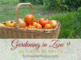 Zone Gardens - best 25 zone 9 gardening ideas on pinterest full sun perennials