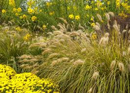 choose the best ornamental grass for your garden garden club