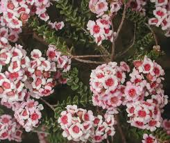 perth native plants gardening and landscaping for perth homes very ventura lifestyle