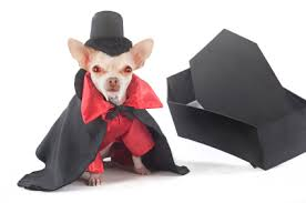 Small Dog Halloween Costumes Pet Halloween Costumes U2026verrry Scarrry Small Dog Clothes