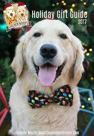 happy thanksgiving day golden woofs