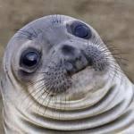 Seal Meme Generator - awkward seal meme generator imgflip