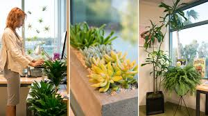 plant for office gardening 9 to 5 the office gets a plant makeover the horticult