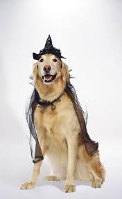 Dog Spider Halloween Costume Witch Dog Costume Village