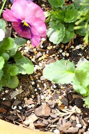 How To Keep Pests Away From Garden - 25 unique squirrel repellant ideas on pinterest a squirrel