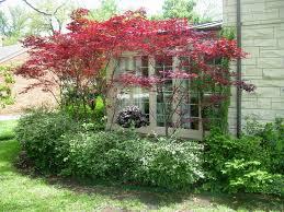 ornamental trees and interesting small ornamental trees