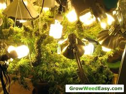 plant grow lights lowes plant grow lights lowes plant light bulbs promotion shop for