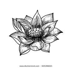 lotus flower stock vector 73612636 shutterstock
