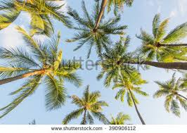 trees looking up stock images royalty free images vectors