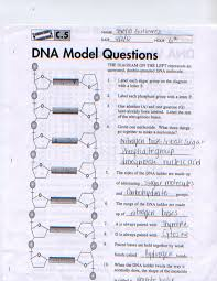 Dna Structure And Replication Worksheet Key Biology