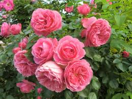 scientific names of flowers with pictures flowers ideas