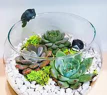 plant it succulent air plant cactus arrangment terrarium