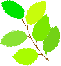 clipart simple spring new leaves