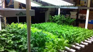 Plant Lights How To Choose by How To Choose The Right Hydroponic Grow Lights For Your Garden