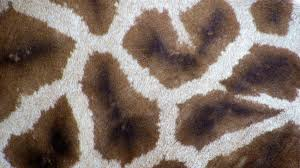 tappeti di pelliccia tappeto pelle di mucca morbidezza infinita dalani e ora westwing