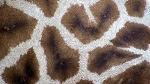 tappeti pelle di mucca tappeto pelle di mucca morbidezza infinita dalani e ora westwing