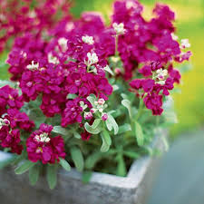 stylish winter garden flowers winter flowers for the garden alices