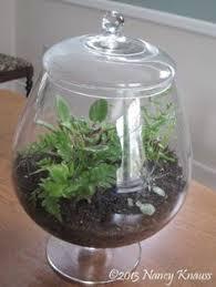 glass terrarium xlg teardrop terrarium hanger my favorite
