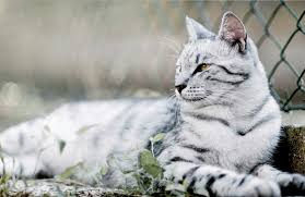 download wallpaper cat tabby mesh fence lie hd background