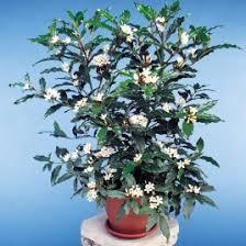 Indoor Container Gardening - indoor tropical container plants logee u0027s rare tropical plants