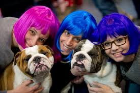 affenpinscher crufts 2014 pictures from crufts 2014 birmingham mail