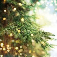 the history of christmas trees south coast theworldlink com