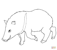 collared peccary coloring page free printable coloring pages