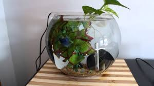 Beta Fish In Vase The Ultimate Betta Bowl Youtube