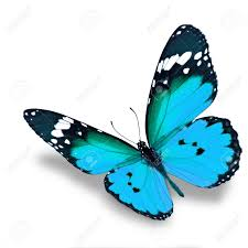 beautiful blue butterfly flying isolated on white background stock