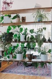 83 best interior plants images on pinterest plants houseplants