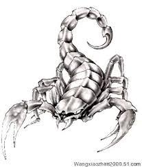 free cool scorpion tattoo designs tattoo art gallery
