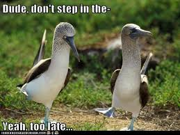 Boobies Memes - animal capshunz blue footed boobies funny animal pictures with